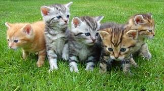 kittens-555822__180